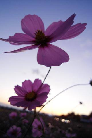 100花・植物