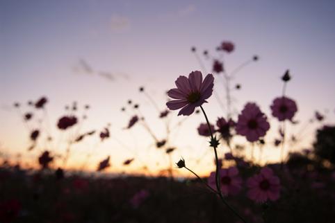 101花・植物