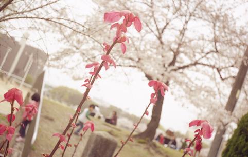 73花・植物