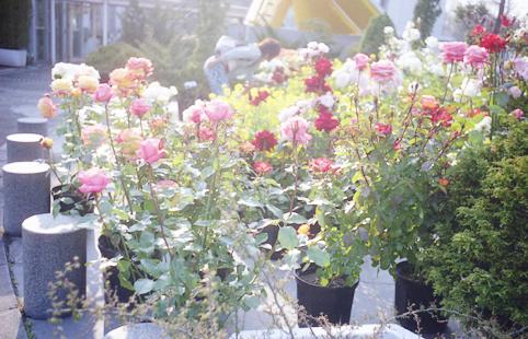 93花・植物