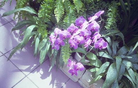 86花・植物