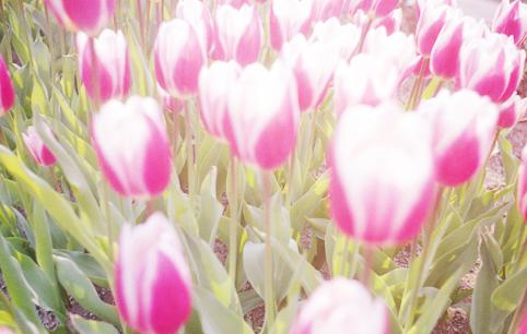 94花・植物