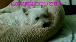 20090101192025_convert_20090307081139.jpg