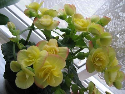 贈られたお花。