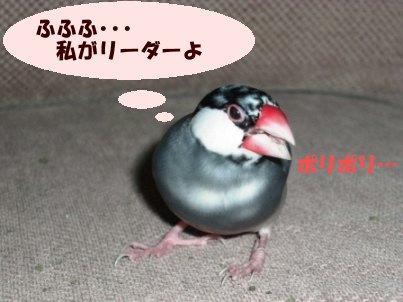 文鳥 001