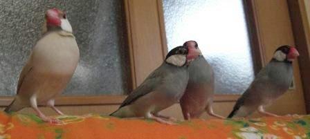 他の鳥と比べて