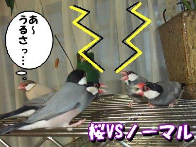 桜VSノーマル