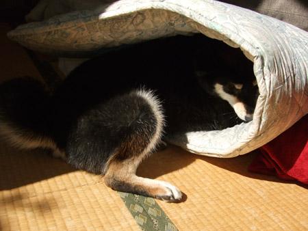 頭かくして尻尾かくさず(2008/11/13)