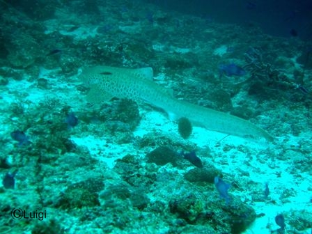 blog_1leopardshark191008.jpg