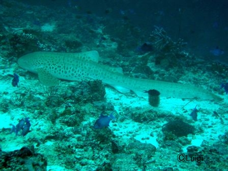 blog_2Leopardshark191008.jpg
