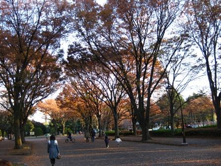 blog_komazawakouenn291108.jpg