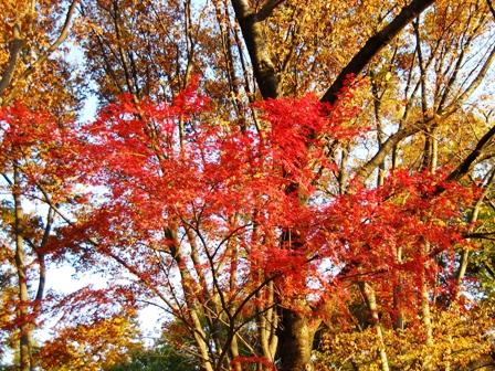 blog_komazawamomiji291108.jpg