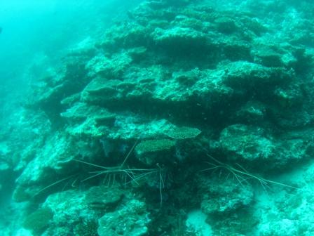 blog_lobster080908.jpg