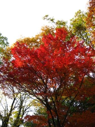 blog_momiji151108.jpg