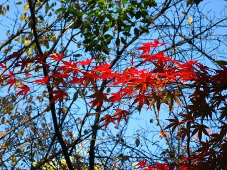 blog_momiji291108.jpg