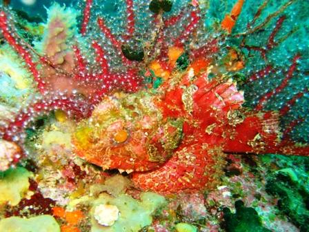 blog_scorpionfish111008.jpg