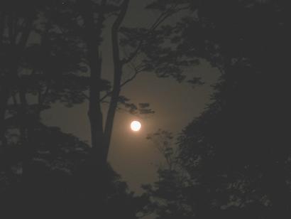 暗がりで見る木々は影絵のよう&満月