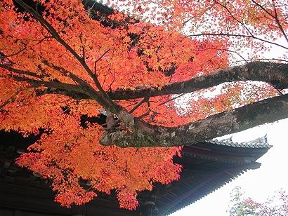紅葉と門の右側