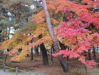 黄と木と赤