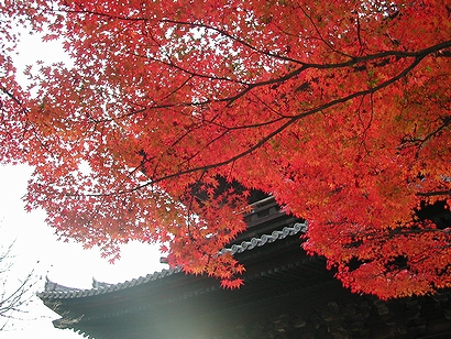 紅葉と門の左側