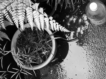 ペットボトルと葉と水溜り