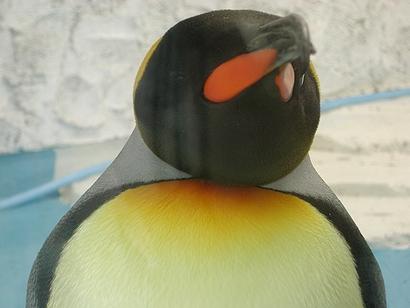 はいはいペンギンですけども