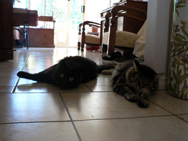 zane and cuba