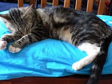 sleeping missy