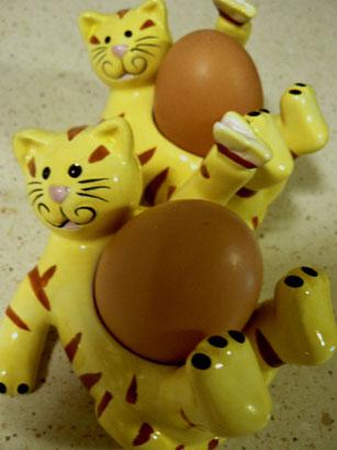 egg cat
