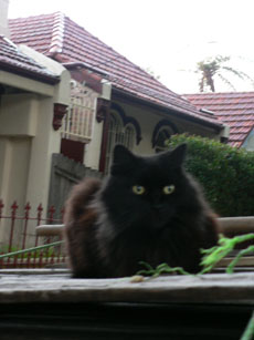 cat in annandale