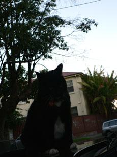 cat in annandale2