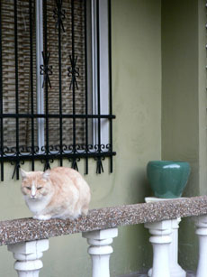 cat in annandale5