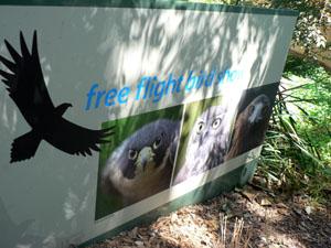 Taronga Zoo Bird Show