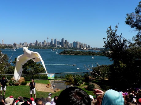 Taronga Zoo Bird Show4