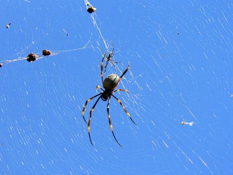 OP-spider