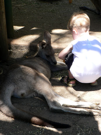 featherdale wildlife park11