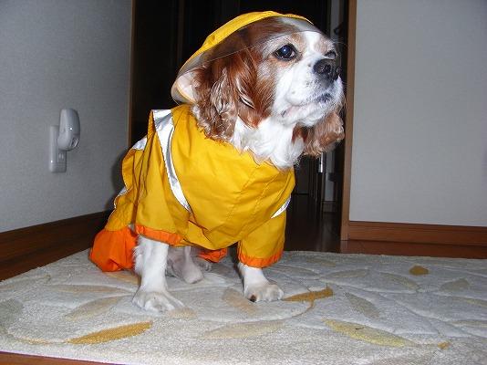 雨中散歩準備OK