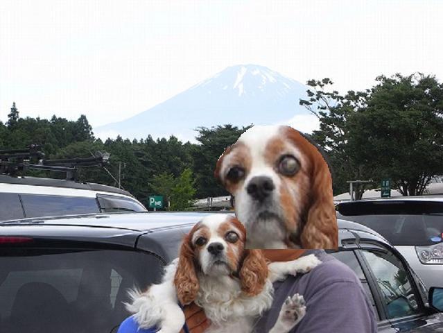 富士山背景にブルポとご主人