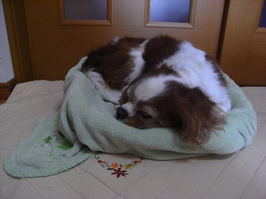 暖かベッド快適や~
