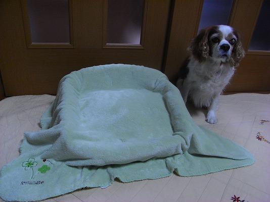 暖かベッド完成!