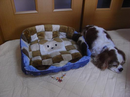 座布団でブルポ・ベッド組立