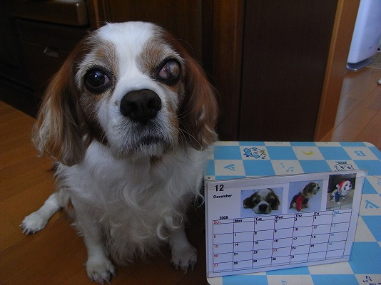 ブルポ・カレンダー