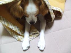 2008_11160067.jpg
