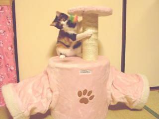 cat-tw01