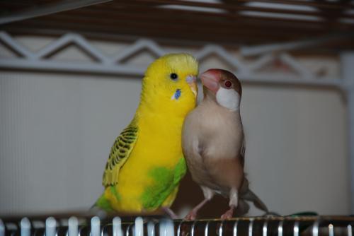 ピーチとココ