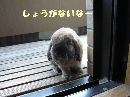 べらんぽ4