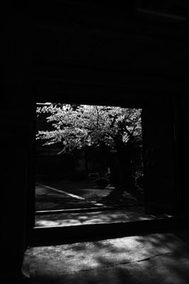 IMG_3770のコピー