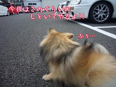 コネコネ7