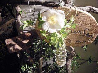 バラの原種