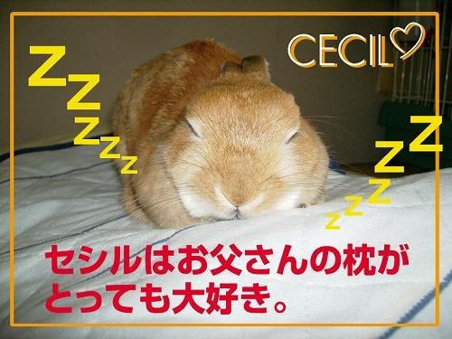 枕大好き1